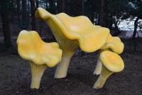 130801-203814-Pilka-Park-Grzybowy.jpg