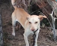 Pilne! - pies do adopcji